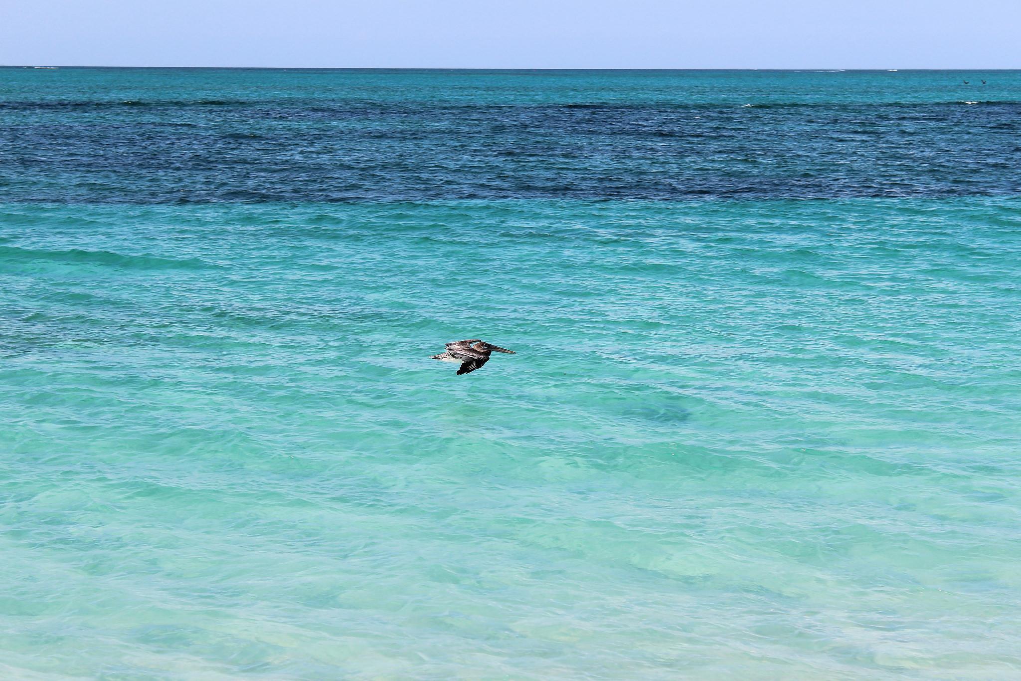 capturas de peces en el Mar Caribe