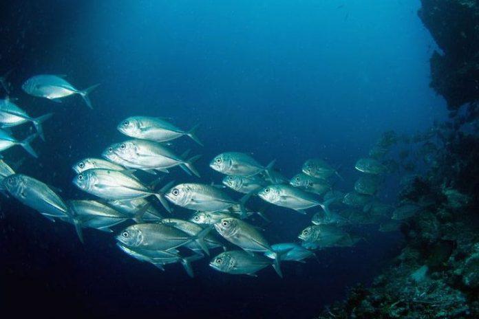 Ecuador propone medidas alternativas de conservación del atún del OPO