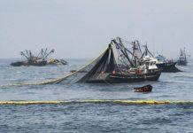 Efectos del cambio climático en la pesca
