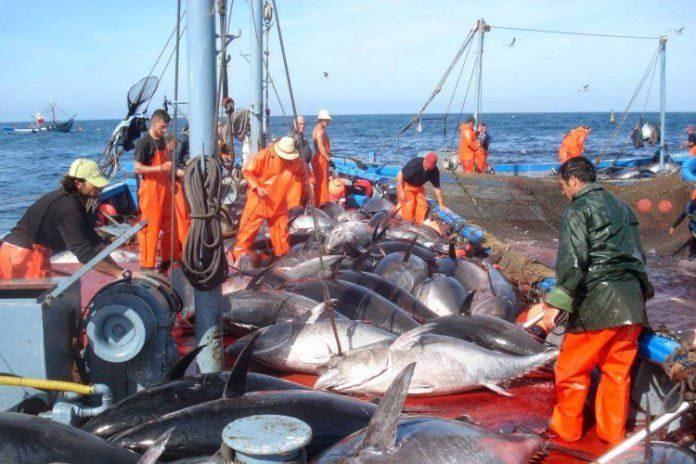 La importancia del entrenamiento del personal de los buques pesqueros