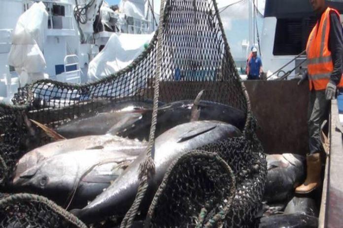 Nuevo equipo de pesca para mejorar la rentabilidad de la industria