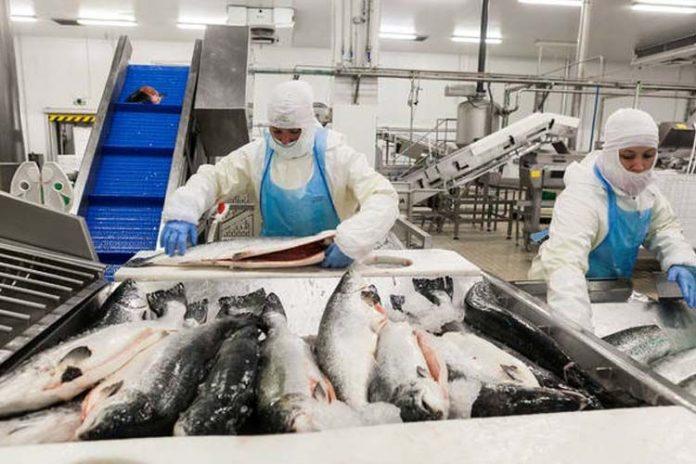 Preocupación en la UE por control en la importación de pescado