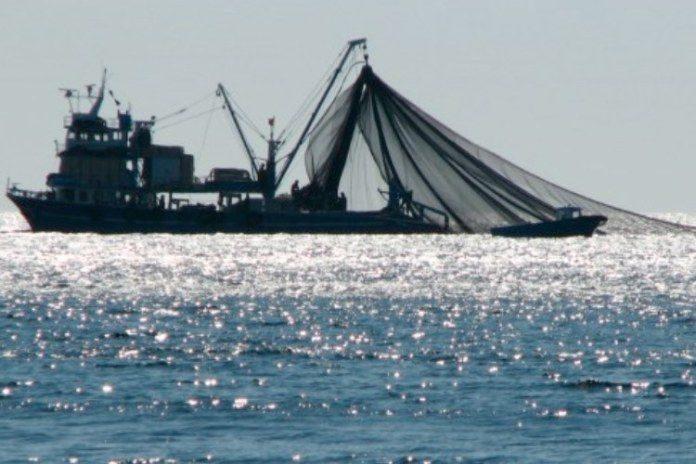 Proyecto PrimeFish y la cadena de valor en la pesca