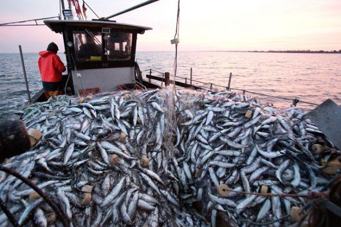 OIT aprueba nuevo convenio sobre el trabajo en la pesca