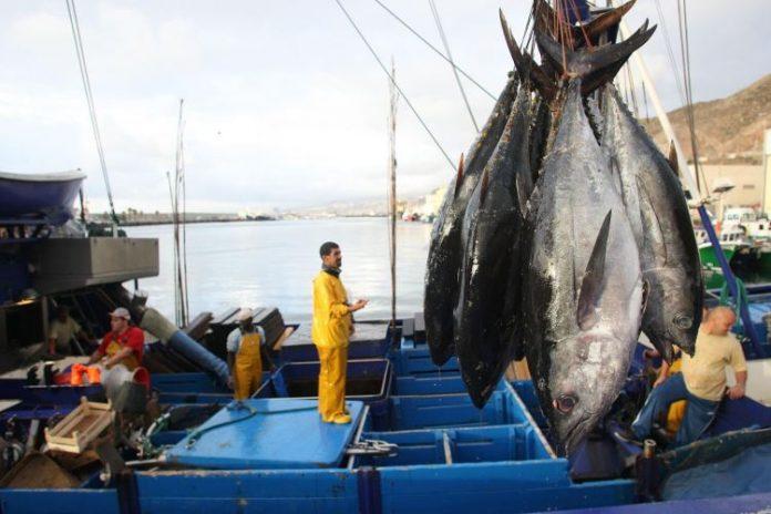 Informe de ISSF trae buenas nuevas para la pesca de atún