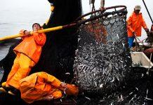 Industria pesquera de Reino Unido: ejemplo de seguridad de buques pesqueros