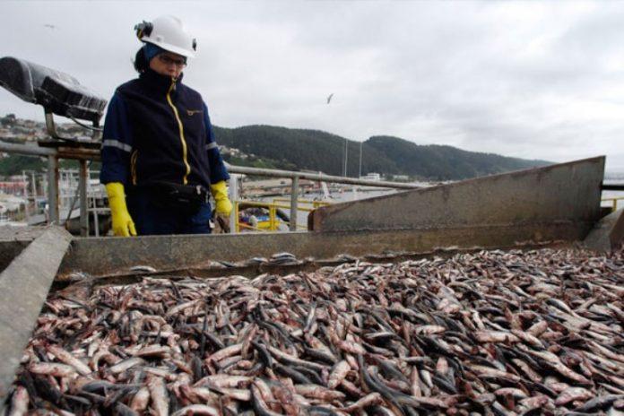 La industria pesquera y su búsqueda de personal calificado para la pesca