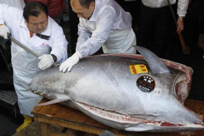 Subasta de atún en japón de inicio de año revoluciona el mercado