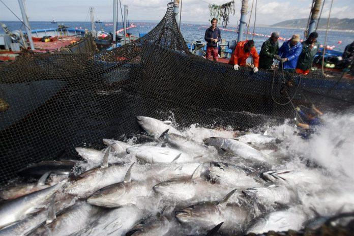 pesca atún de ecuador